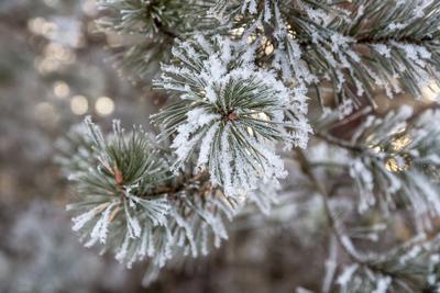 Рождественский подарок Барабаново Енисей Красноярский край Рождество январь 2020