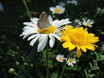 ЛЕТО! природа лето флора фауна цветы макро насекомые бабочки