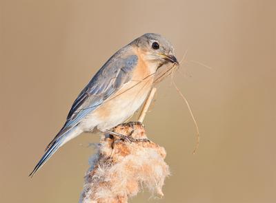 С Международным Днем Птиц - Весенние хлопоты у птиц!