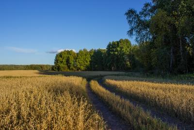 ***Лето пейзаж лето дорога поле лес