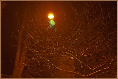 *** природа,вечер,дерево,фонарь