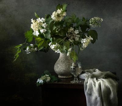 Цветы калины натюрморт still life