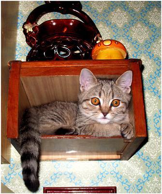 Портрет котенка в интерьере. котенок дом