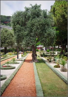 В парке Бахаи Хайфа Израиль
