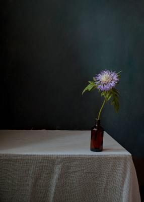Один. цветы натюрморт