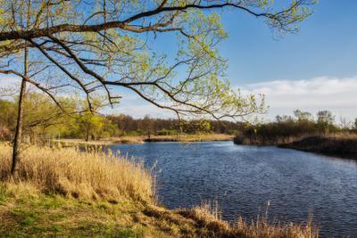 Вечереет пейзаж природа весна вечер ясно дерево река Усманка Веневитиново пригород Воронеж