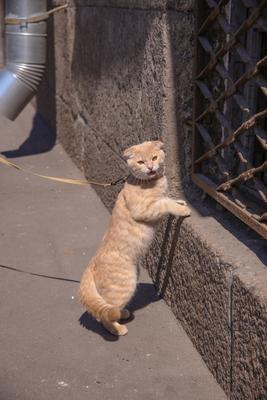 Отстань, я на экскурсии! кошки