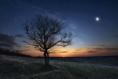 *** закат ночь звезды дерево калач-на-дону сумерки