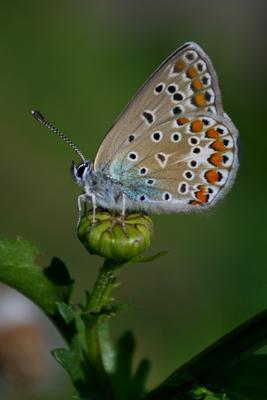 Летний мотив макро бабочка