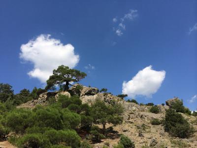 ***высоко Крым сосна лето голубой горы кайф ветер ливень