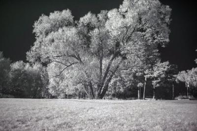 Дерево ик-фото пейзаж дерево парк