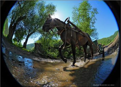 В предгорьях Алтая...  Горный Алтай путешествия бричка конный туризм Владимир Бугаев