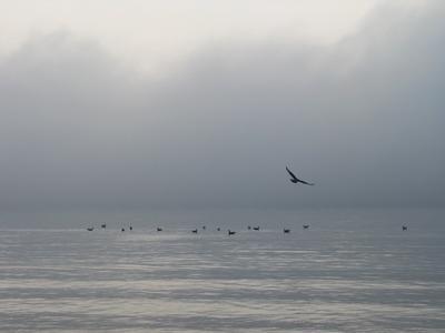 туманность море туман птица