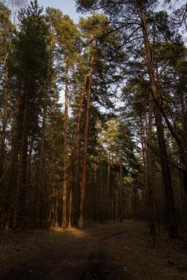 Лесная тропинка Закат Ярославль лес весна