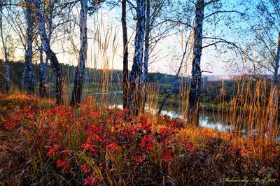 Осенняя зарисовка. Октябрь. пейзаж природа осень лето новосибирск лес облака фотообои