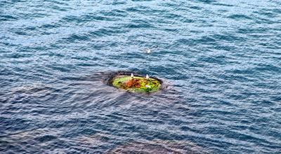 Островитяне островок море чайки аязьма