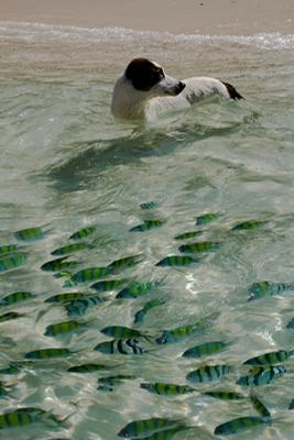 - Ну можно я еще поиграю? собака рыбки Тайланд