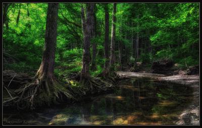 О сказках лесного ручья... лес, ручей