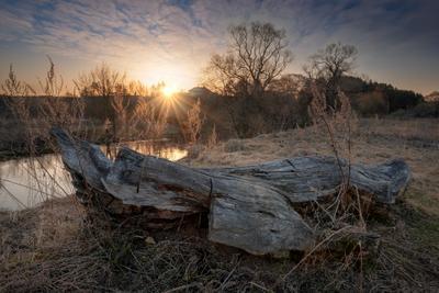 Коряга пригрелась река истра утро коряга деревья рассвет вода