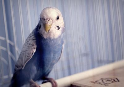 Девочка попугайчик