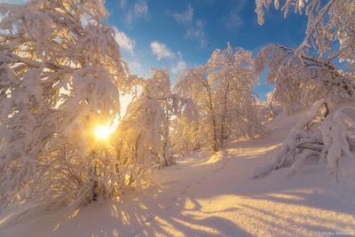 В январском лесу солнце лес зима снег мороз сугробы
