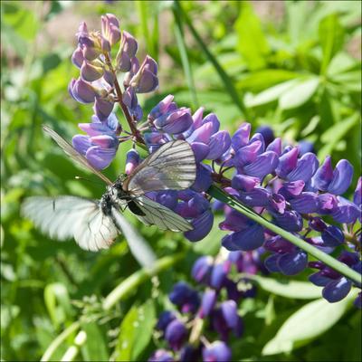 Butterfly sex sex butterfly