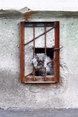 Я ВАС ВСЕХ НЕНАВИЖУ!11 кот решетка подвал