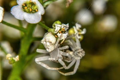 Немного о любви 3 или как размножаются пауки альбиносы Немного о любви пауки