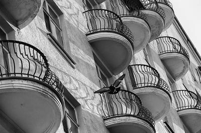В моем доме мой дом балконы голубь весна