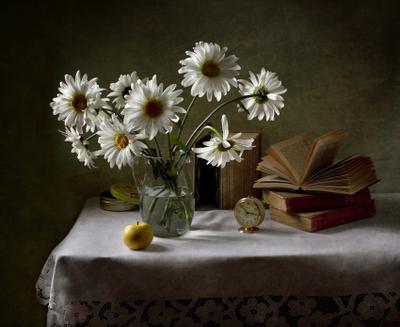 Ромашковый цветы, ромашки, осень