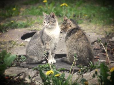 Два  друга!! кот.кошка.животные