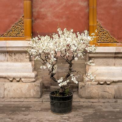 Весна Добро пожаловать в Китай