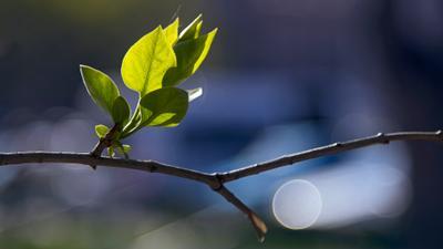 весна пришла 2014 путешествия россия север canon пономарев природа санкт-петербург макро листья цвет свет боке