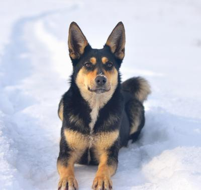 Джесси собаки зима снег ясинский