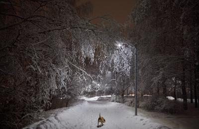 Московский вечер в феврале Москва снег ночь аллея зима