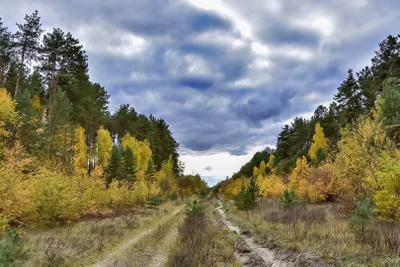 Тучи Осень погода тучи лес