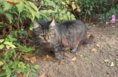Котята неразумные дерутся тут совсем рядом... кошки осень дома