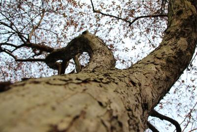 Рост дерево рост Лондон парк