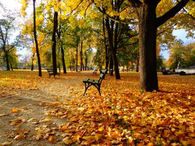 ***Золотая аллея осень лавочка аллея парк листья краски золото
