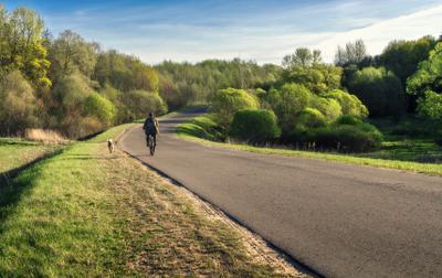 Уже скоро! весна дорога велосипидист собака тепло