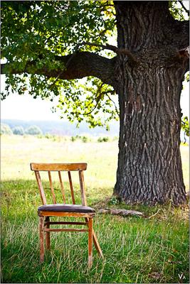 жизнь и смерть дерево, стул, лес