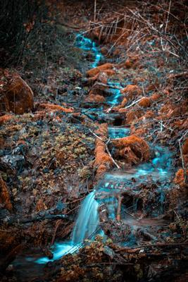 ручей осень осенний лес ручей