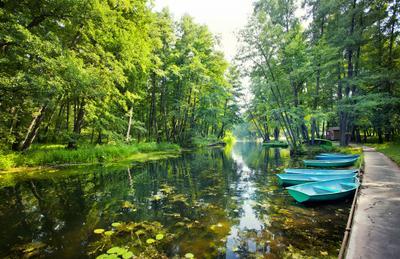 Тихие заводи детства река усманка воронеж заводь таинство сказка лето вода