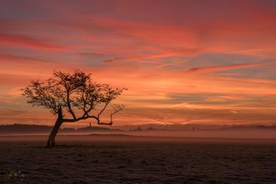 Рассвет в Феникс-парке ирландия рассвет фототур дублин