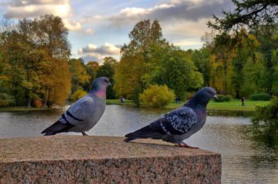 Куда уходит лето? лес, осень, голуби, пруд, вода
