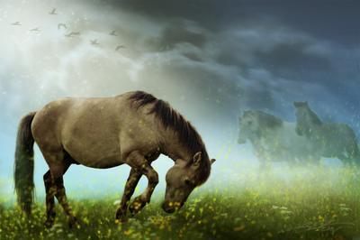 Wild III Digital Photo Art Horses Wild Nature Reserve Eltons Fantasies