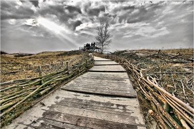 Дорога в дюны Куршская коса