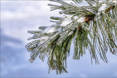 *** зима природа макро