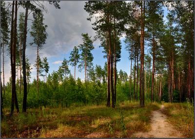 В июльском лесу лес, июль, пейзаж
