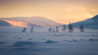 Морозная нега горный алтай кош-агачский район курайская степь зима ферваль морозное утро рассвет просторы простор лиственницы туман снег сугробы горы курай